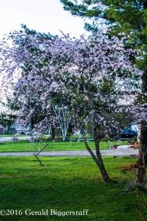 aprilflowers-10