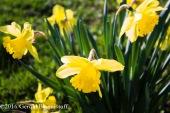 aprilflowers-11