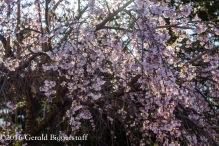 aprilflowers-3