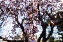 aprilflowers-4