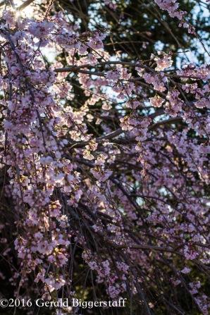 aprilflowers-5