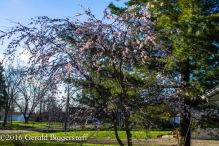 aprilflowers-8