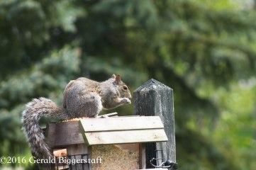 squirreleat-10