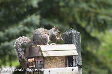 squirreleat-11