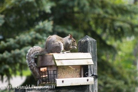 squirreleat-12