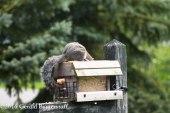 squirreleat-13
