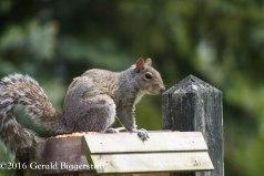 squirreleat-15