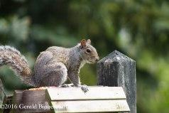 squirreleat-16
