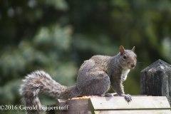 squirreleat-17