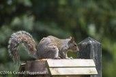 squirreleat-19