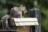 squirreleat-2