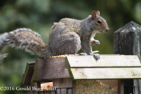 squirreleat-20