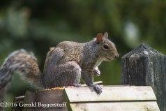 squirreleat-24