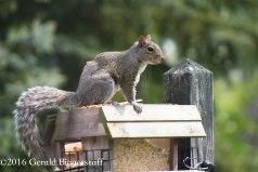 squirreleat-25