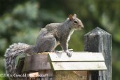 squirreleat-26