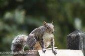 squirreleat-28