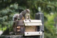 squirreleat-29