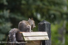 squirreleat-3