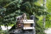 squirreleat-30