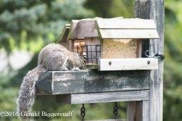 squirreleat-33