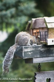 squirreleat-34