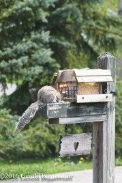 squirreleat-36