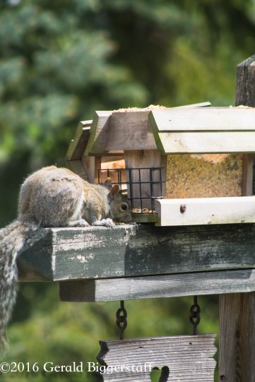 squirreleat-38