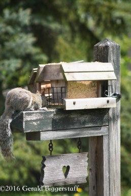 squirreleat-39