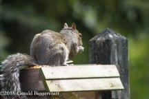 squirreleat-4