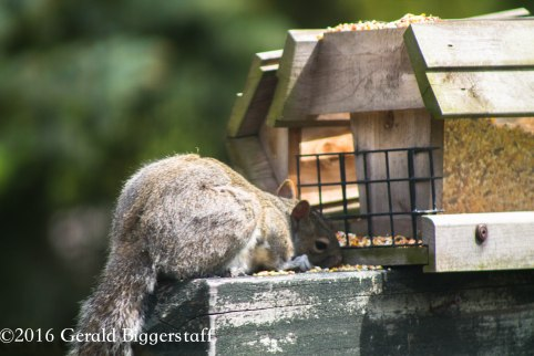 squirreleat-40