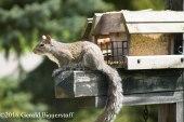 squirreleat-41