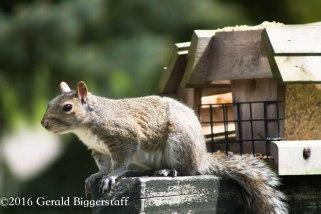 squirreleat-43