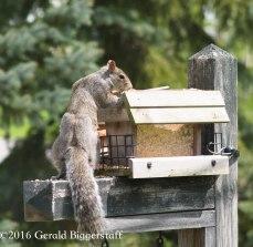 squirreleat-44