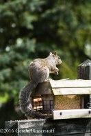 squirreleat-46