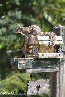 squirreleat-48
