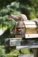 squirreleat-49