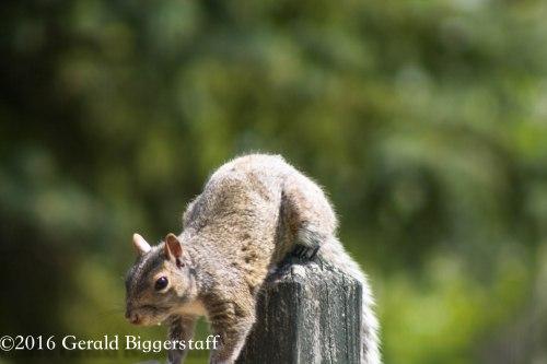 squirreleat-50