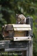 squirreleat-52
