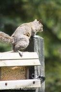 squirreleat-55