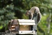 squirreleat-57