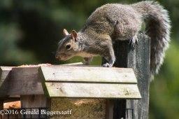 squirreleat-58
