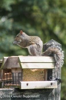 squirreleat-59