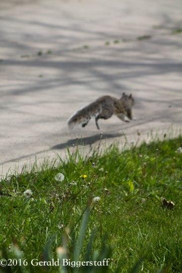squirreleat-61