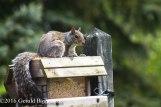squirreleat-8